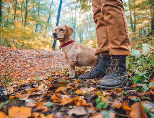 The Trouble with Ticks: How to Protect Your Pet Against Tick-Borne Illnesses