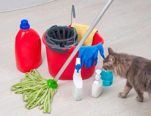 Hidden Hazards in Your Home: Common Pet Toxins